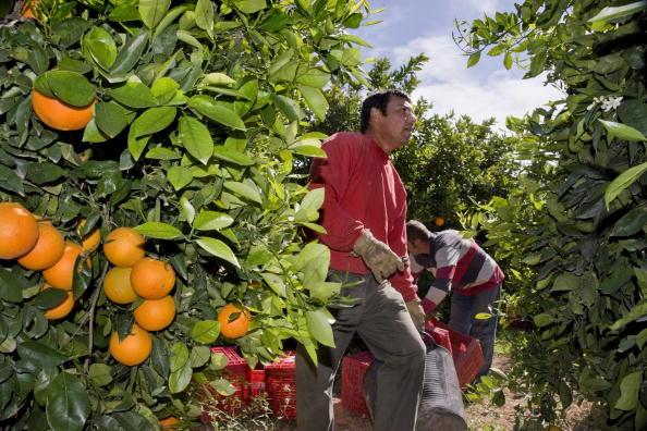 Orange - Fruit「Valencia, Spain」:写真・画像(2)[壁紙.com]
