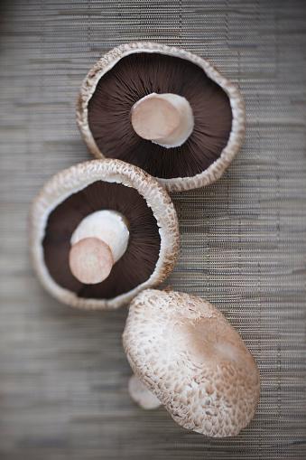 Portobello Mushroom「Portobello mushrooms」:スマホ壁紙(14)