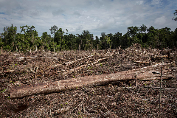 Ecosystem「Indonesia's Orangutans Battle With Deforestation」:写真・画像(13)[壁紙.com]