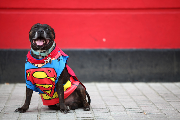 犬「Owners Enter Their Dogs In To The Sci-fi Dogs Parade」:写真・画像(18)[壁紙.com]