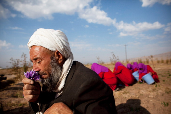 Saffron「Saffron Harvested in Herat」:写真・画像(1)[壁紙.com]