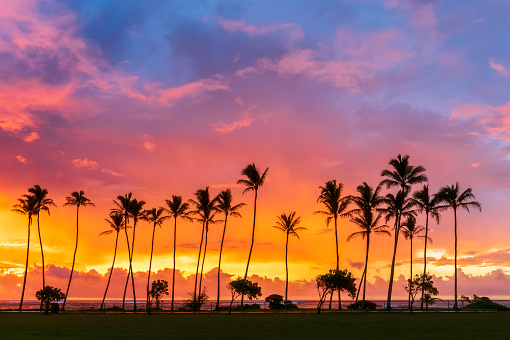 Hawaii Islands「USA, Hawaii, Kauai, Pacific Ocean, Kapa'a Beach Park, palms at sunrise」:スマホ壁紙(4)