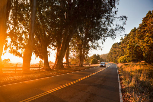 Big Sur「Trees at sunset over a country road」:スマホ壁紙(5)