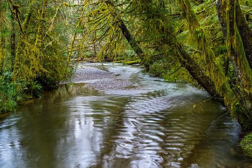Cannon Beach「Ecola Creek flows through mossy rain forest」:スマホ壁紙(7)