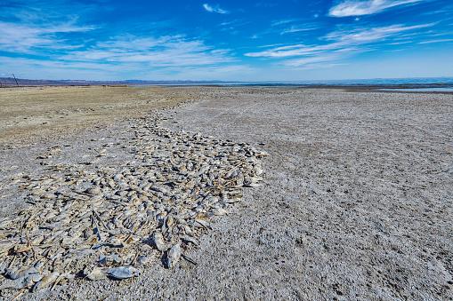Photoshot「Dead fish on beach,Salton Sea,California,USA」:スマホ壁紙(7)