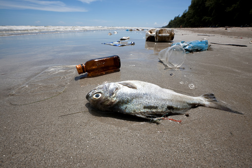 イエローキャブ「Dead fish on a beach surrounded by washed up garbage.」:スマホ壁紙(4)