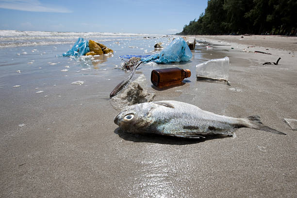 Dead fish on a beach surrounded by washed up garbage.:スマホ壁紙(壁紙.com)