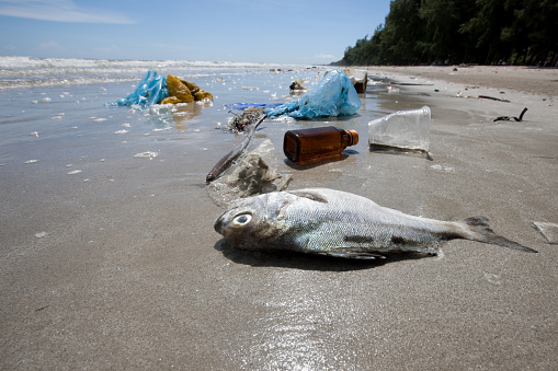 イエローキャブ「Dead fish on a beach surrounded by washed up garbage.」:スマホ壁紙(0)