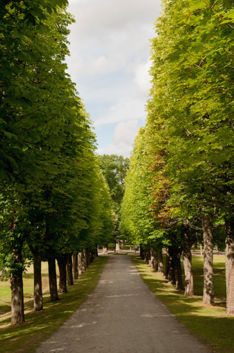 Drottningholm Palace「A Tree Lined Path At Drottningholm Palace」:スマホ壁紙(19)