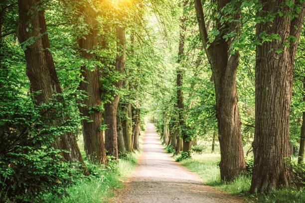 Tree lined path:スマホ壁紙(壁紙.com)