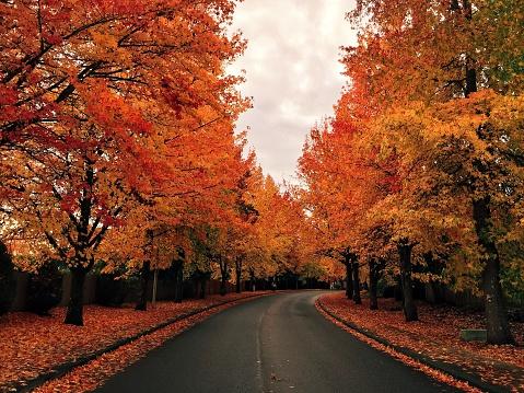 秋「Tree lined road in autumn」:スマホ壁紙(18)