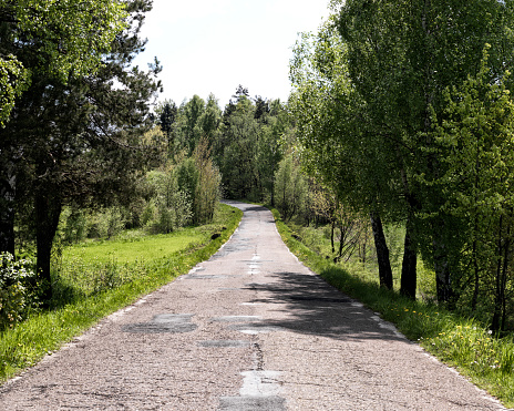 The Nature Conservancy「Tree lined country road in Bulgaria」:スマホ壁紙(13)