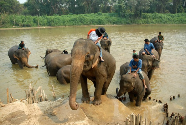 Adults Only「Elephant Polo In Thailand」:写真・画像(17)[壁紙.com]