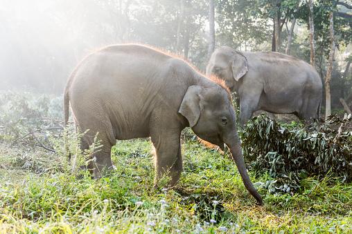 Himalayas「Elephants, Chitwan National Park, Nepal」:スマホ壁紙(4)