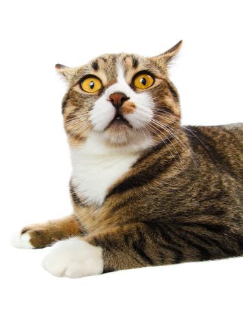 Animal Eye「surprised cat」:スマホ壁紙(18)