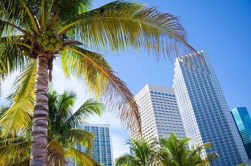 Miami「Palm tree with office buildings in Miami, FL」:スマホ壁紙(5)