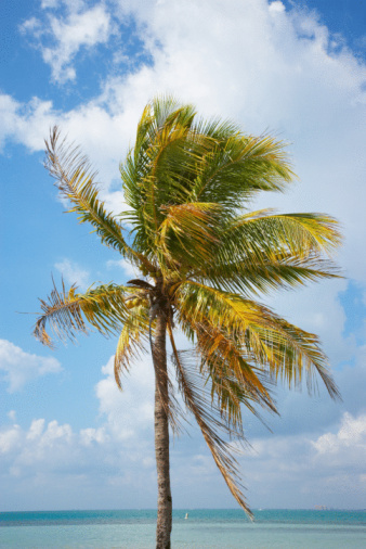 Frond「Palm tree with blue sky in Miami, Florida」:スマホ壁紙(12)