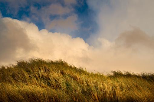Tall - High「Wind blowing tall green grass under clouds」:スマホ壁紙(5)