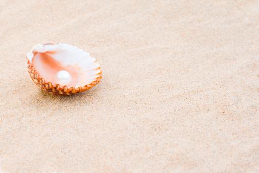 豪華 ビーチ「パールの貝殻」:スマホ壁紙(13)