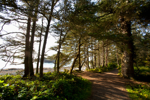 Miami Beach「The Hiking Trail Leading To South Beach In Pacific Rim National Park Near Tofino」:スマホ壁紙(14)