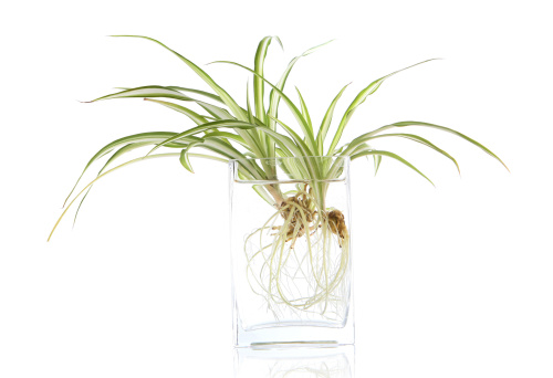 Planting「Growing plants」:スマホ壁紙(10)