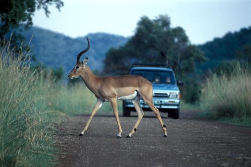 Passenger「Antelope crossing street」:スマホ壁紙(11)