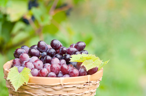 Grape「Bunch of grapes in the basket with vine background (III)」:スマホ壁紙(3)