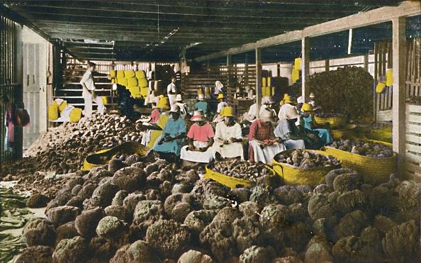 Hand Colored「Esfakis - Sponge Packing House - Nassau」:写真・画像(3)[壁紙.com]