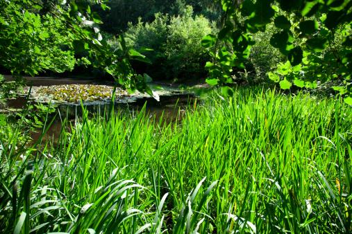 Water Lily「A little pond」:スマホ壁紙(1)