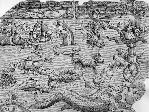 動物「Sea Monsters」:写真・画像(14)[壁紙.com]