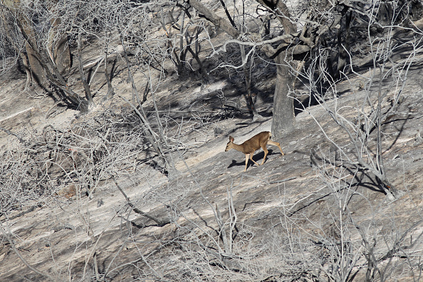 Animal「Early Southern California Wildfires Threaten Area」:写真・画像(4)[壁紙.com]