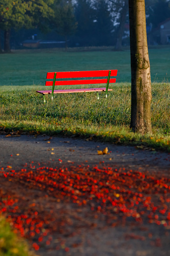 Rowanberry「Germany, Red bench in autumn」:スマホ壁紙(15)