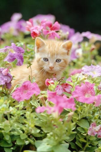 子猫「Kitten in flowers」:スマホ壁紙(17)