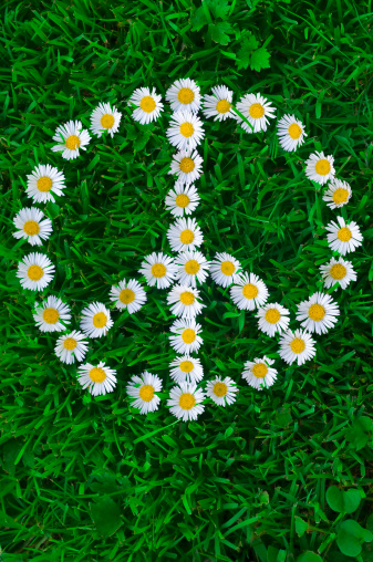 Music Festival「White daisies, laying on the grass forming a peace sign symbol」:スマホ壁紙(13)