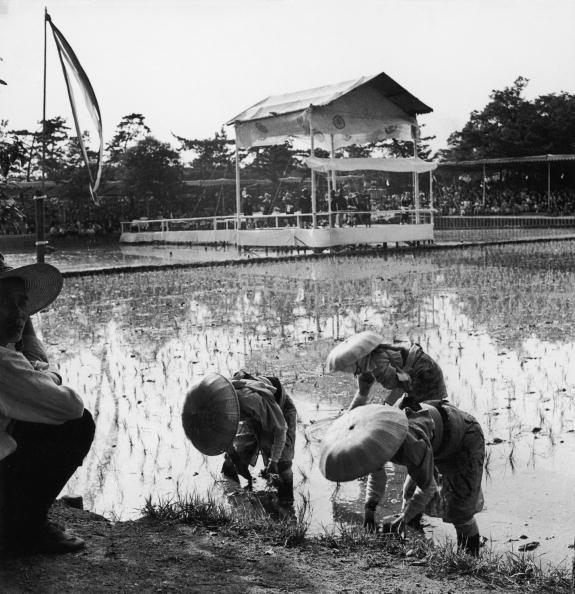 Planting「Rice Planting Ceremony」:写真・画像(1)[壁紙.com]