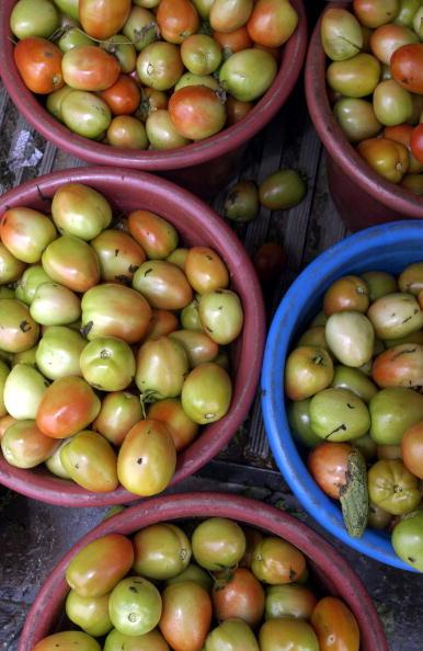 Naples - Florida「Migrant Farmers Pick Produce In South Georgia」:写真・画像(18)[壁紙.com]