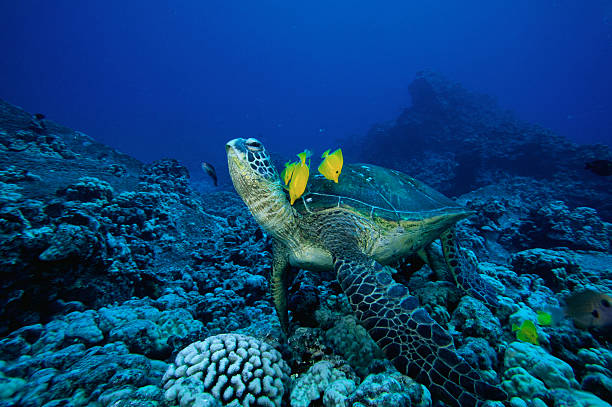 Fish Cleaning a Green Turtle's Shell:スマホ壁紙(壁紙.com)