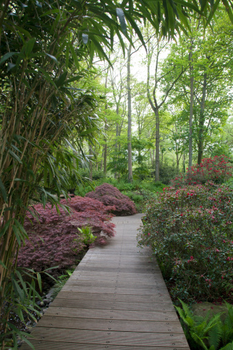 Keukenhof Gardens「Gardens」:スマホ壁紙(19)