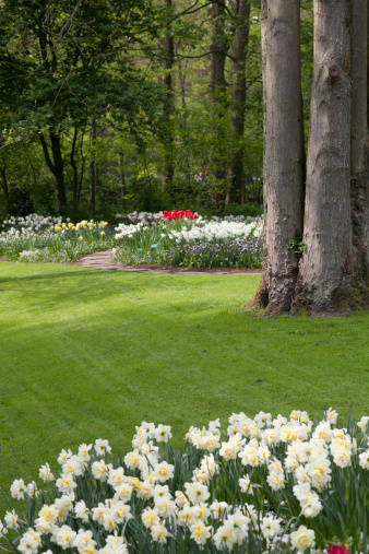 Keukenhof Gardens「Gardens」:スマホ壁紙(8)