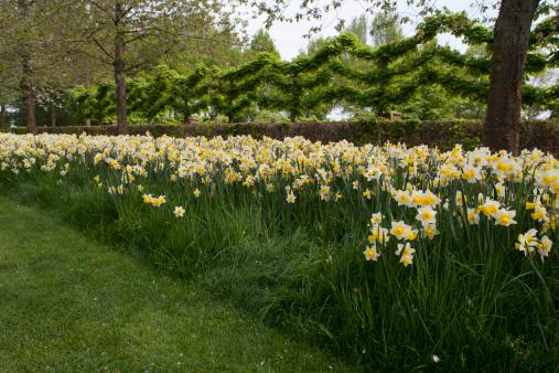 Keukenhof Gardens「Gardens」:スマホ壁紙(10)