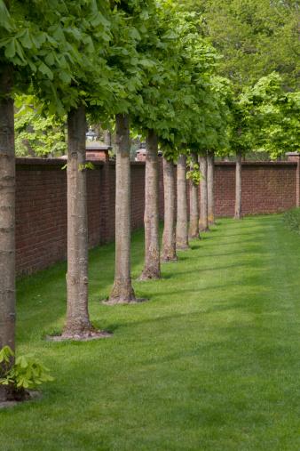 Keukenhof Gardens「Gardens」:スマホ壁紙(18)