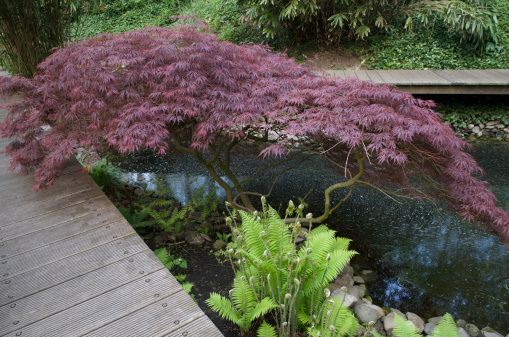 Keukenhof Gardens「Gardens」:スマホ壁紙(14)