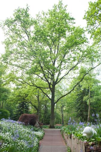 Keukenhof Gardens「Gardens」:スマホ壁紙(17)