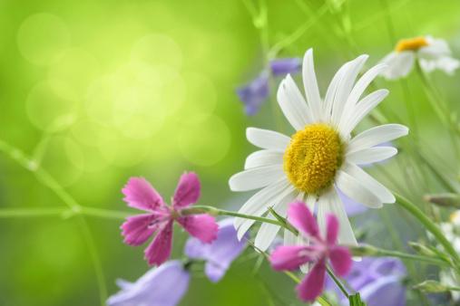 イースター「春の背景」:スマホ壁紙(6)