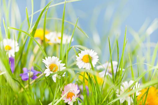 Blossom「春の背景」:スマホ壁紙(13)