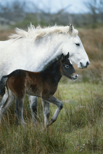 Baby animal「Horse with it's foal in field, side view」:スマホ壁紙(16)