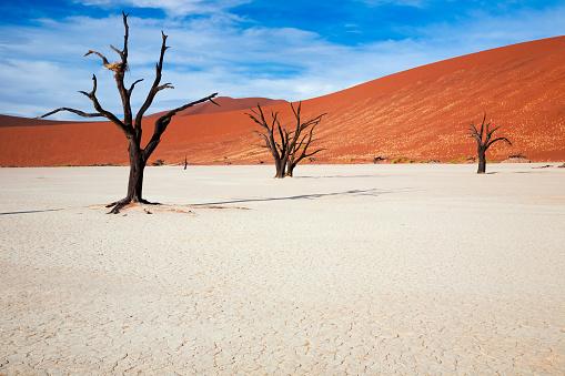 Namibian Desert「Dead Vlei」:スマホ壁紙(7)