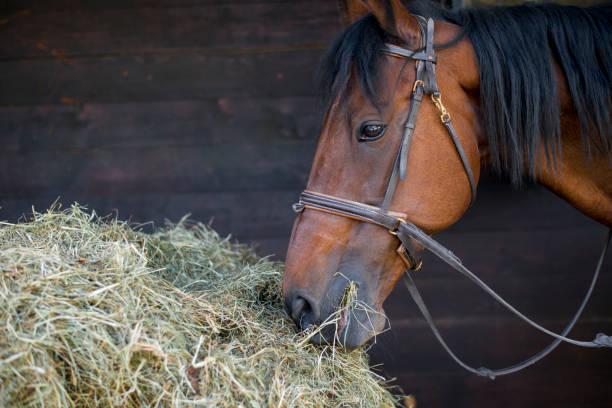 Horse eating hay:スマホ壁紙(壁紙.com)