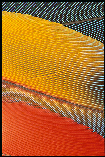 Parrot「Detail of Scarlet Macaw Feathers」:スマホ壁紙(14)