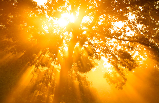 Sunbeam「Gods Rays」:スマホ壁紙(18)